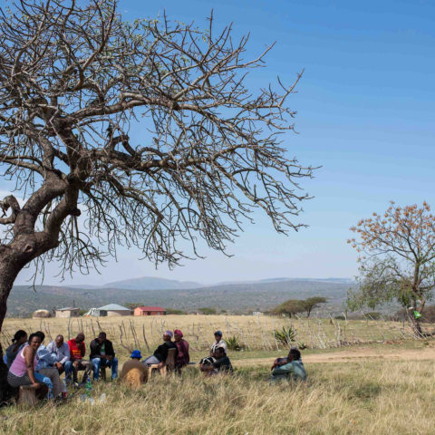 31 August 2018: Babanango residents gather under a tree outside their village to talk about the status of their land claim in the area.