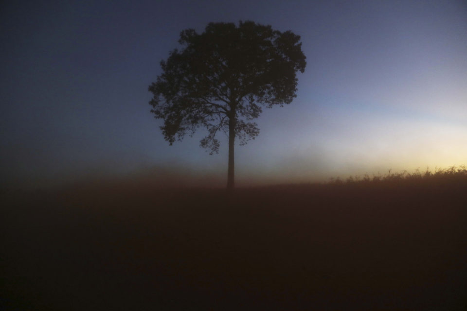 28 June 2017: A lone tree in a deforested section of the Amazon rainforest near Chupinguaia in Rondonia state, Brazil. If you destroy the Amazon, you destroy the planet, say the paper's authors. (Photograph by Mario Tama/Getty Images)