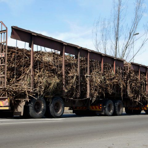 7 June 2019: A truck in Tongaat carrying sugar cane from farmers who supply Tongaat Hulett.