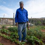 30 August 2019: Much of the produce on Alfred Mtati's vegetable farm is dying because of lack of water.