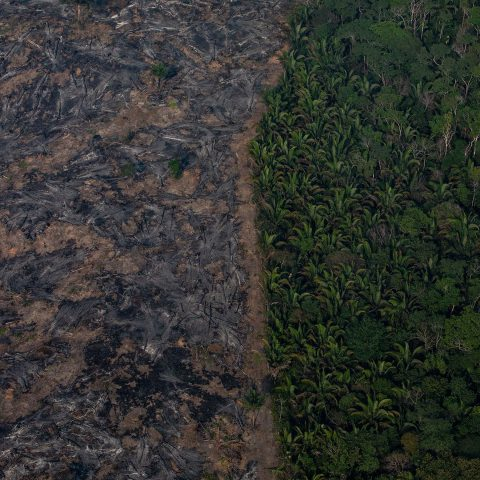 25 August 2019: The Amazon rainforest is being decimated by wildfires in the Candeias do Jamari region near Porto Velho, Brazil. (Photograph by Victor Moriyama/Getty Images)