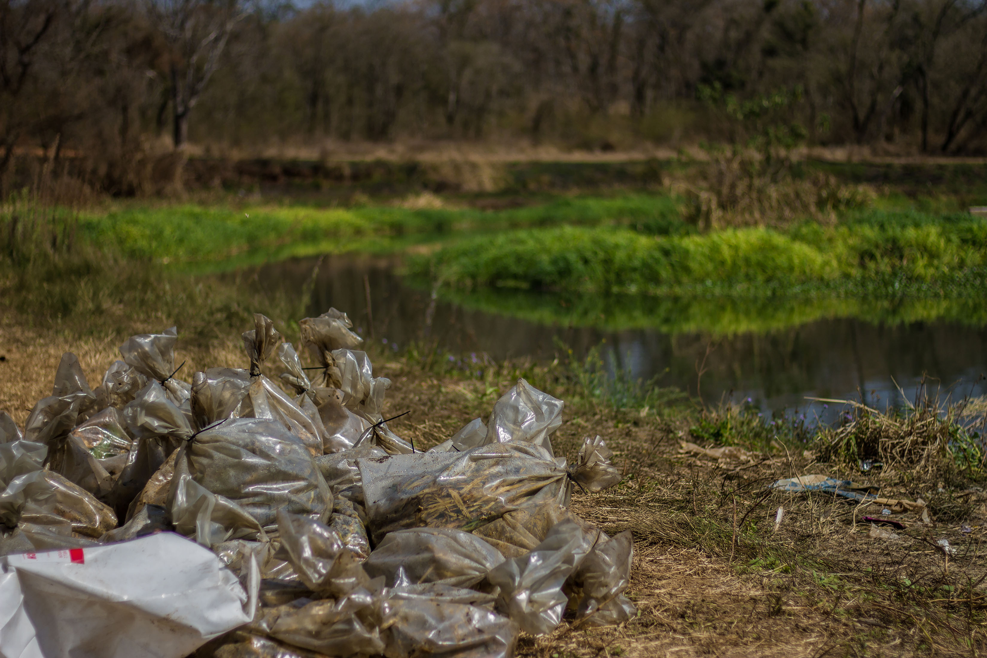 23 August 2019: Pollutants and dead fish collected in plastic bags near the Dusi River at Ashburton in Pietermaritzburg during a clean-up operation.