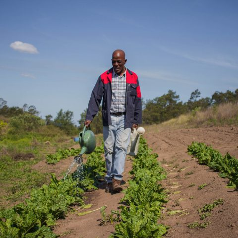 2 October 2019: Customary landowner Zakhele Nkwankwa watering the spinach, sweet potatoes and other vegetables he grows behind his home.