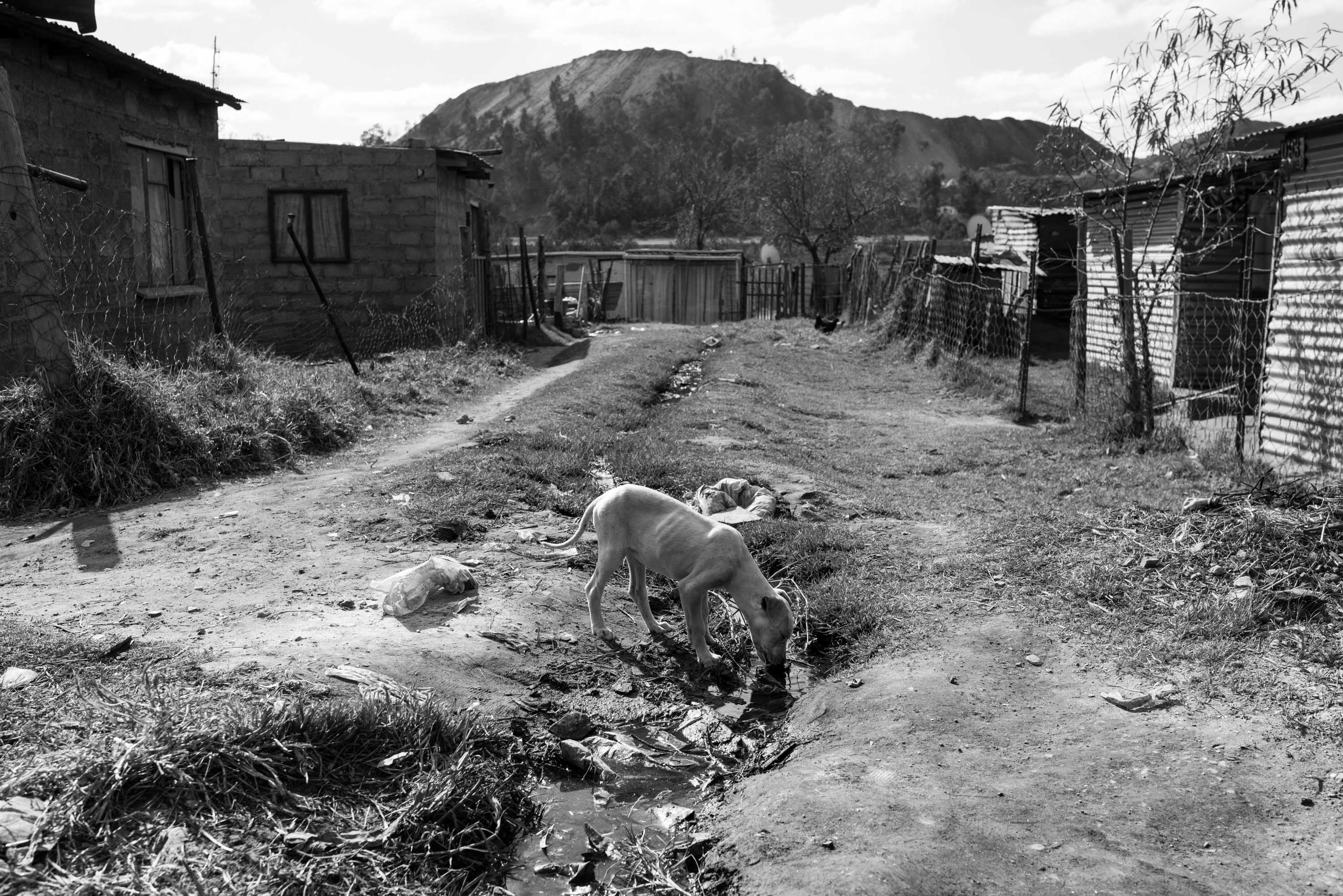 Dog drinking polluted water with a mine dump in the background. Billions are spent and earned in the extractive and energy industries in South Africa, but little of that money reaches the people who live closest to the resources and facilities. Vosman, Mpumalanga.