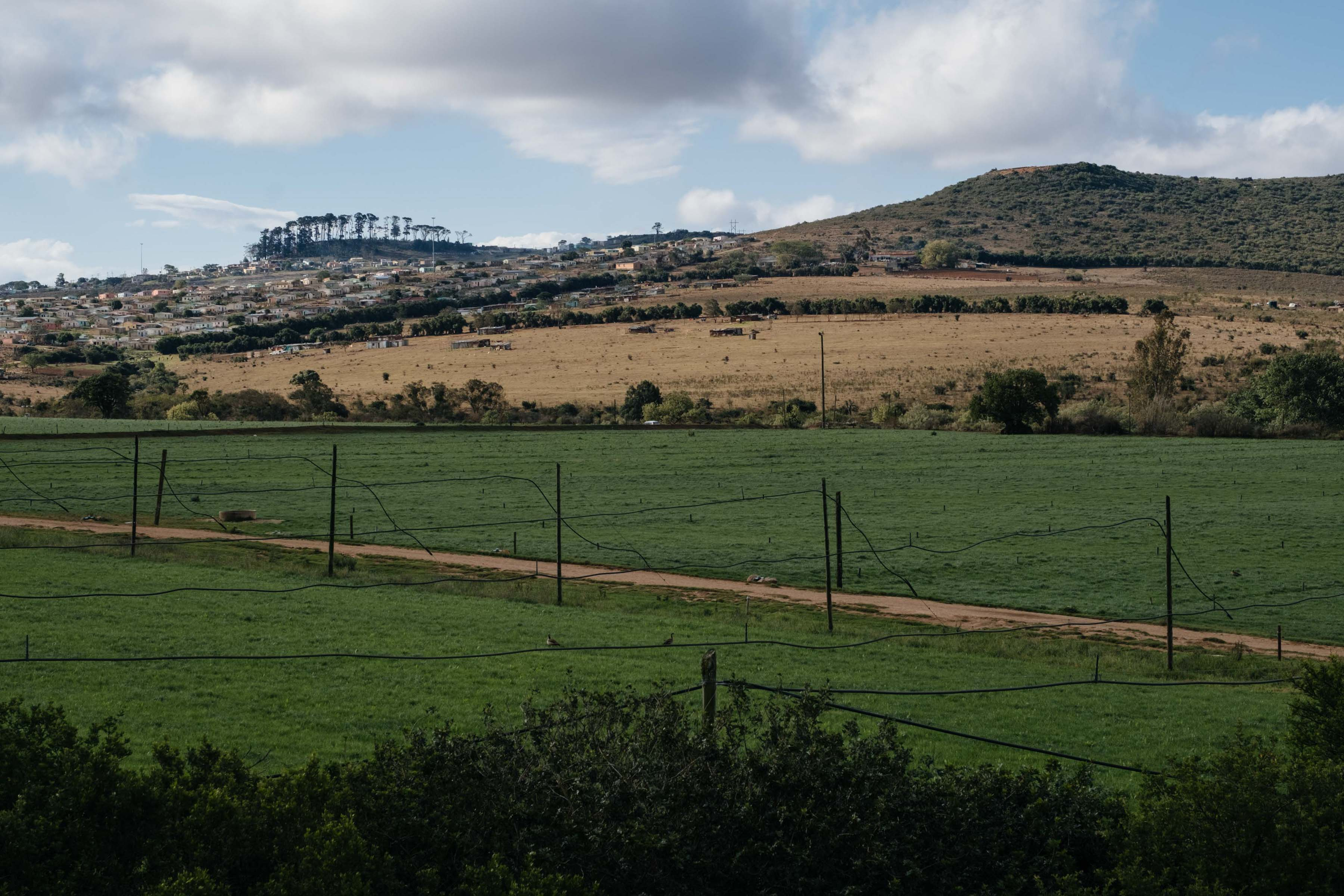 12 November 2019: The contrast between irrigated farmland on the outskirts of Makhanda and the commonage used by township residents for grazing is stark. Farmers have been better able to adapt by sinking boreholes and buying fodder for livestock.