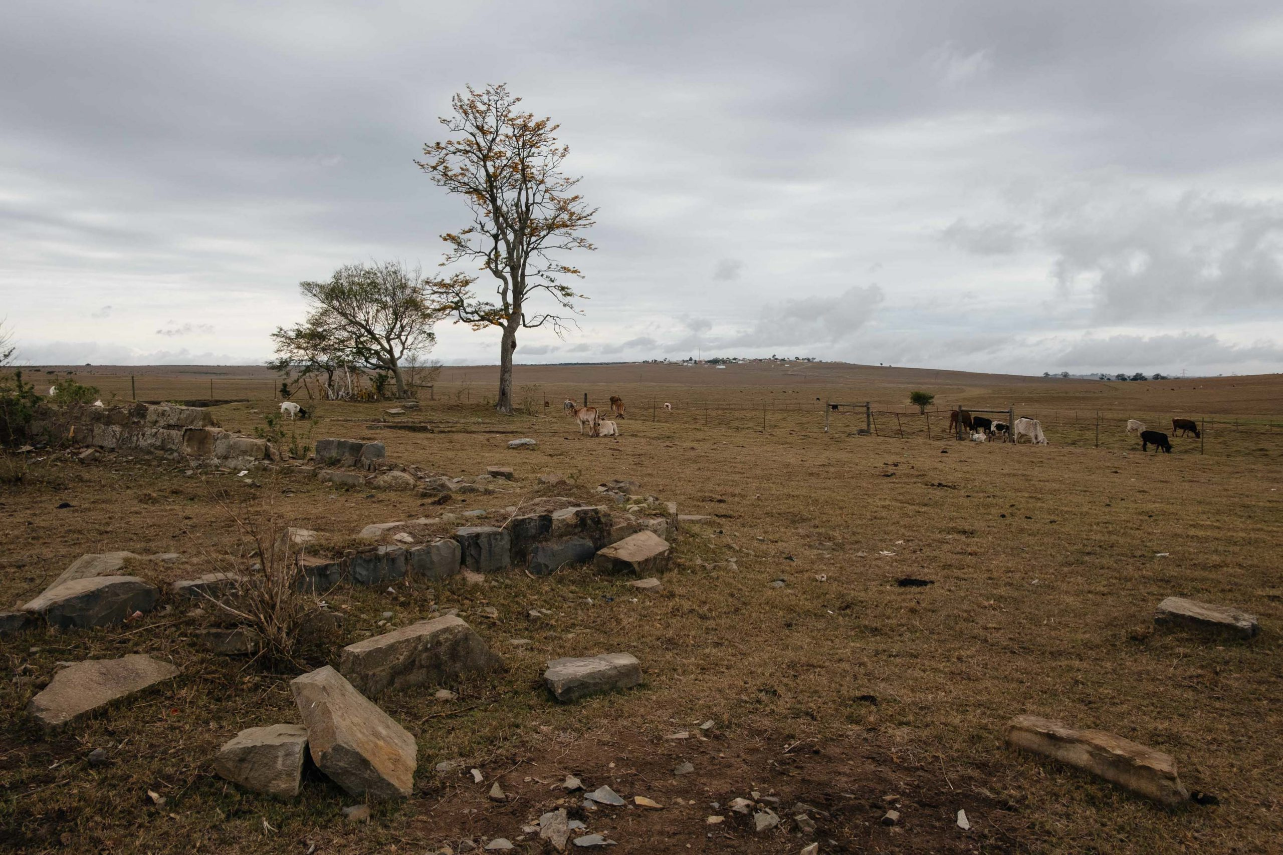10 November 2019: Extended drought coupled with heavy grazing have led to the severe degradation of the Eastern Cape's grasslands, which will have long-term consequences for the livelihoods of rural people in the region.