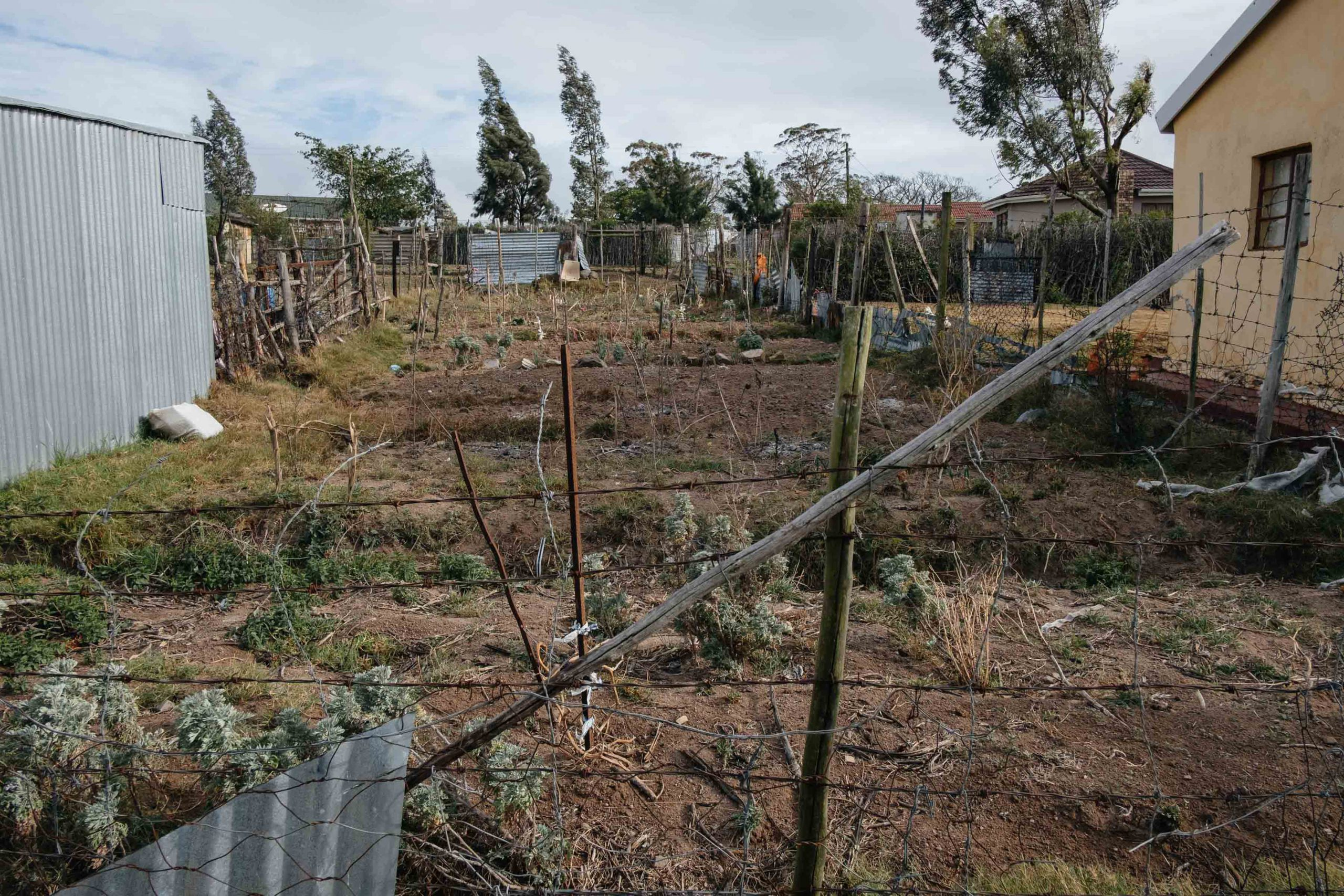 11 November 2019. A vegetable garden in Nqgwele Village is sparsely planted due to poor rainfall, which has gripped the Eastern Cape region since 2016. Vegetable gardens provide an important source of food in many marginalised rural villages.