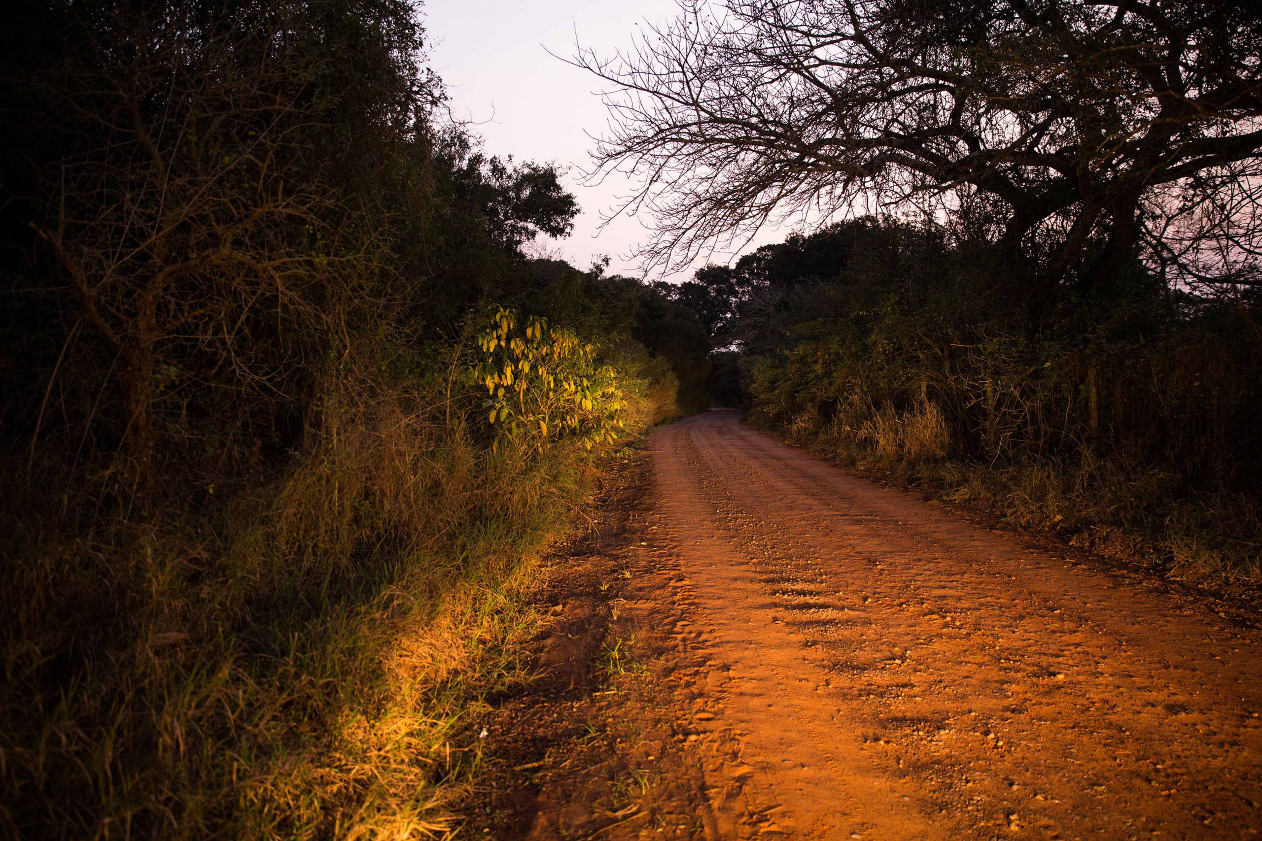 25 November 2018: Car headlights light up the rutted dirt road below Clare Stewart's former homestead on the outskirts of Manguzi. Stewart was abducted near her home on the morning of 10 November 1993.