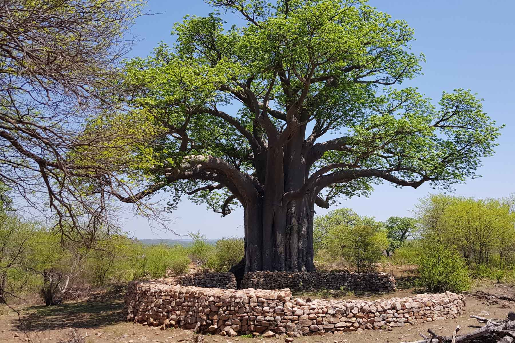 December 2019: The rock walls at Thulamela in the northern Kruger National Park, which dates back 800 years, have been reconstructed in recent times. (Photograph by Lynn Morris)