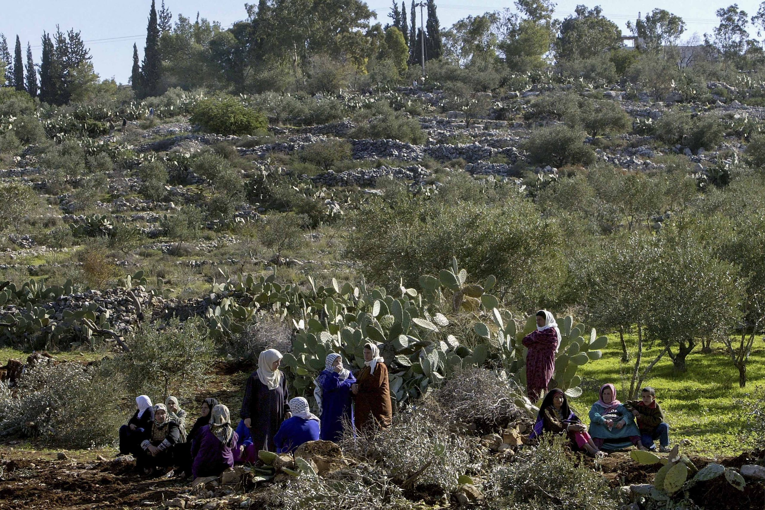 30 December 2003: Palestinian women near the West Bank village of Budrus protest the loss of their land following the construction of Israel's separation barrier. (Photograph by David Silverman/ Getty Images)