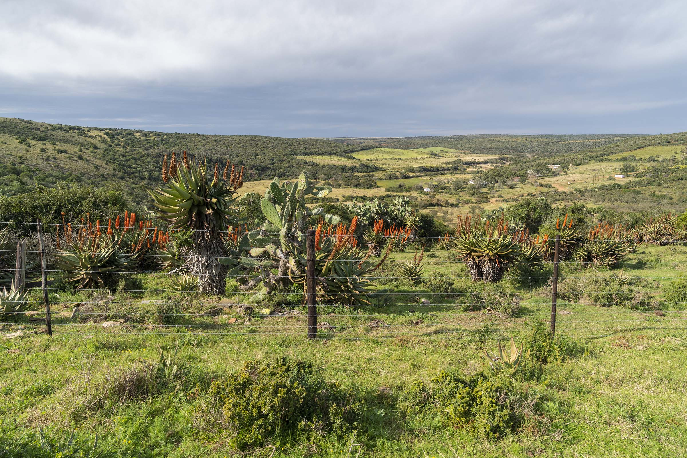 1 July 2019: Brush, aloes and thorn trees dot the land around Salem, 20km southeast of Makhanda.