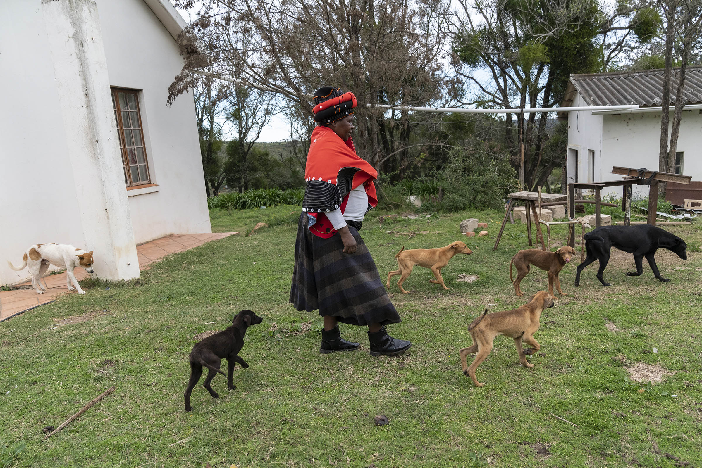 1 July 2019: Lungiswa Madinda's dogs follow her around at Castle Farm in Salem. She is the driving force behind the cooperative that grows crops, from chicory to beans and butternut, and raises cattle, goats and pigs.