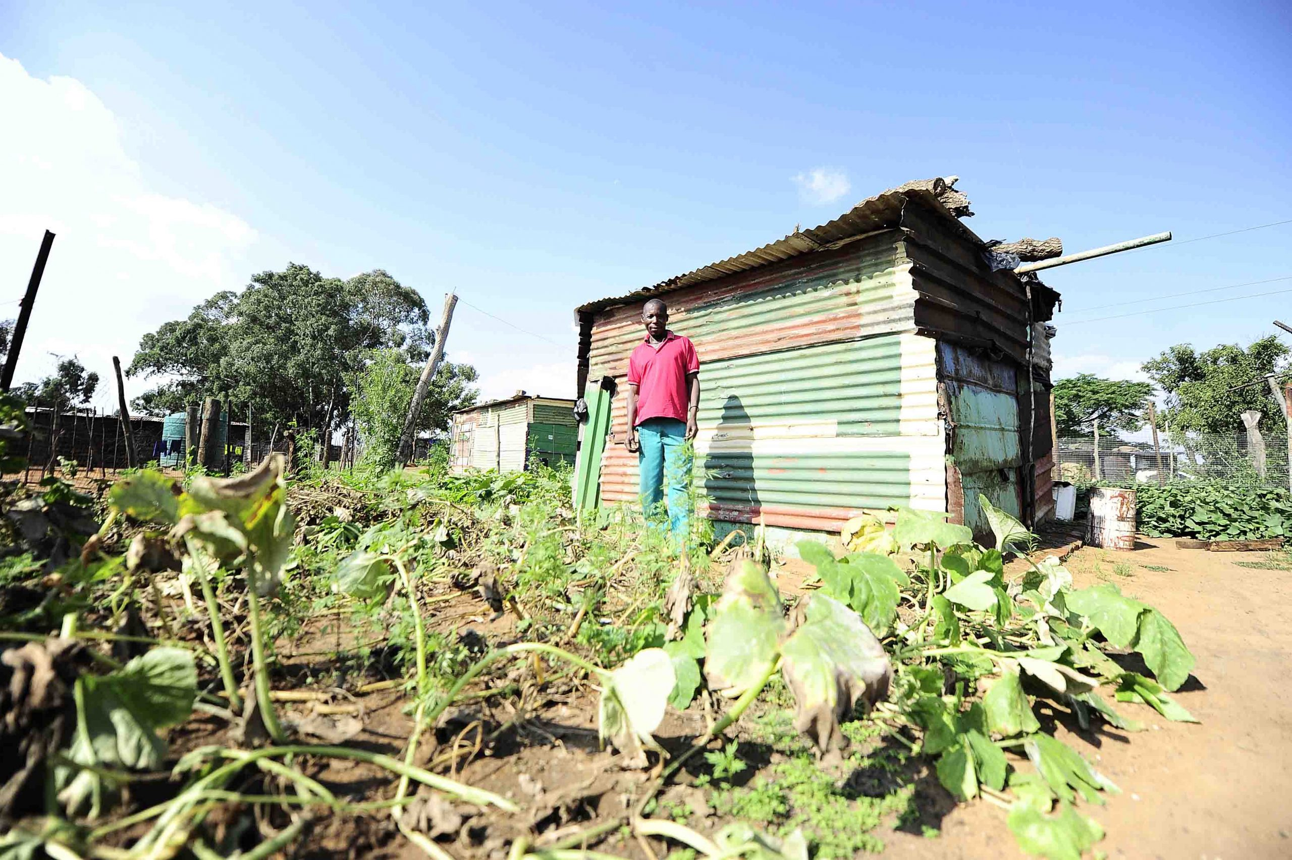 18 March 2016: A resident in a settlement in Mpumalanga where crops struggle to grow because of severe air pollution. (Photograph by Thulani Mbhele/ Sowetan/ Gallo Images)