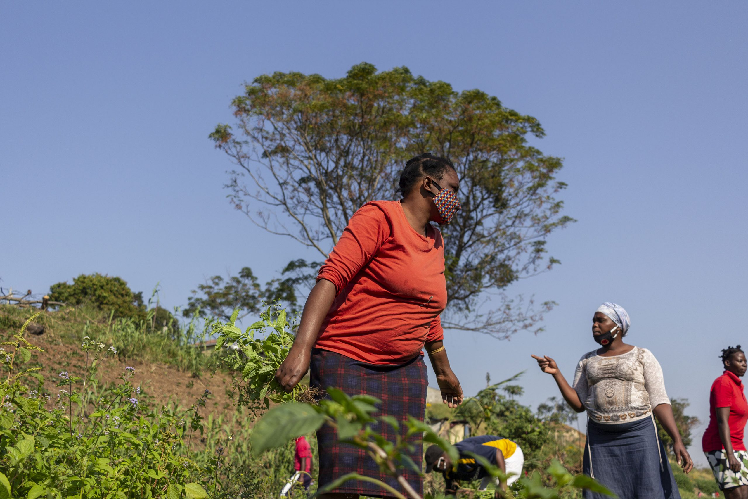 9 June 2020: Zamekile Ngwane works in the food garden alongside other eKhenana residents. They have planted different kinds of seeds and the vegetables they harvest are sometimes their only source of food for the day.