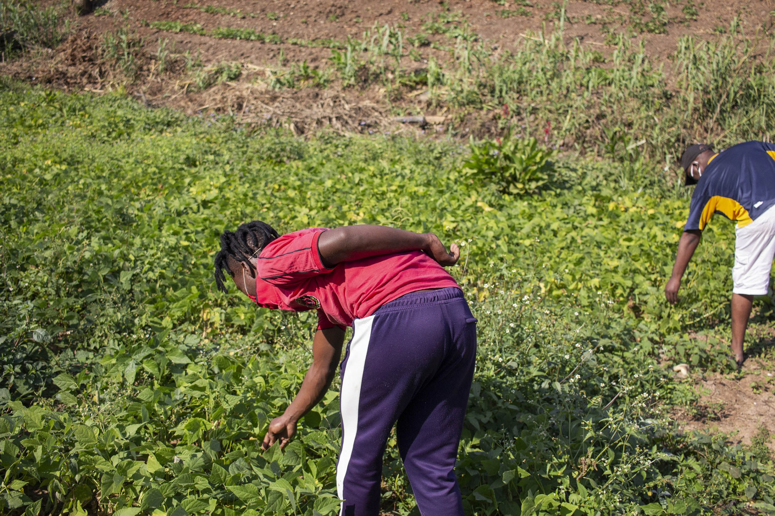 9 June 2020: Being unemployed, 28-year-old Yongama Nonkula has been putting all his effort into the garden, which produces vegetables such as amadumbe, sweet potato, spinach, butternut and cabbage.