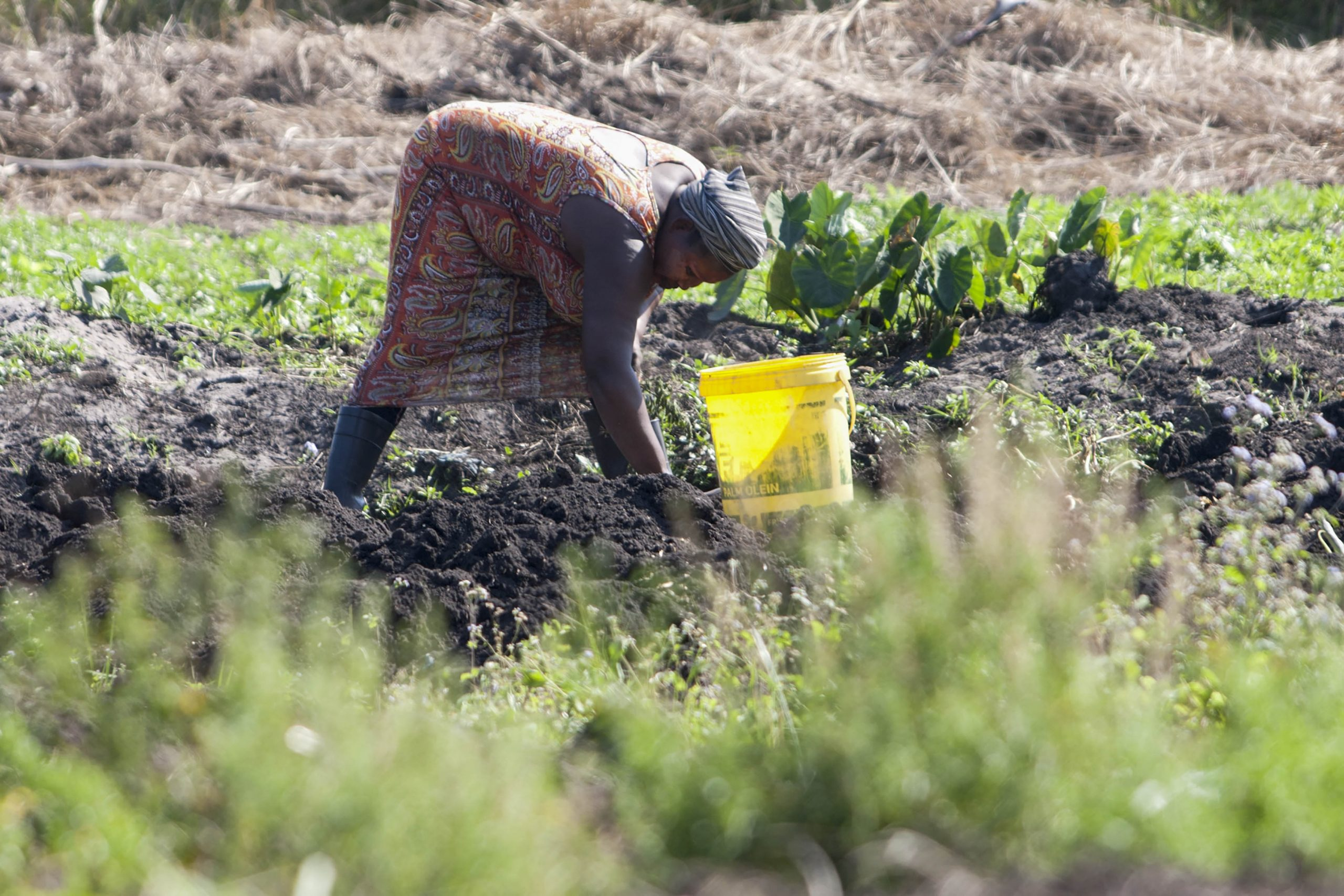 4 August 2020: Phindile Thusi grows and sells madumbes, also known as yams, in central Richards Bay.