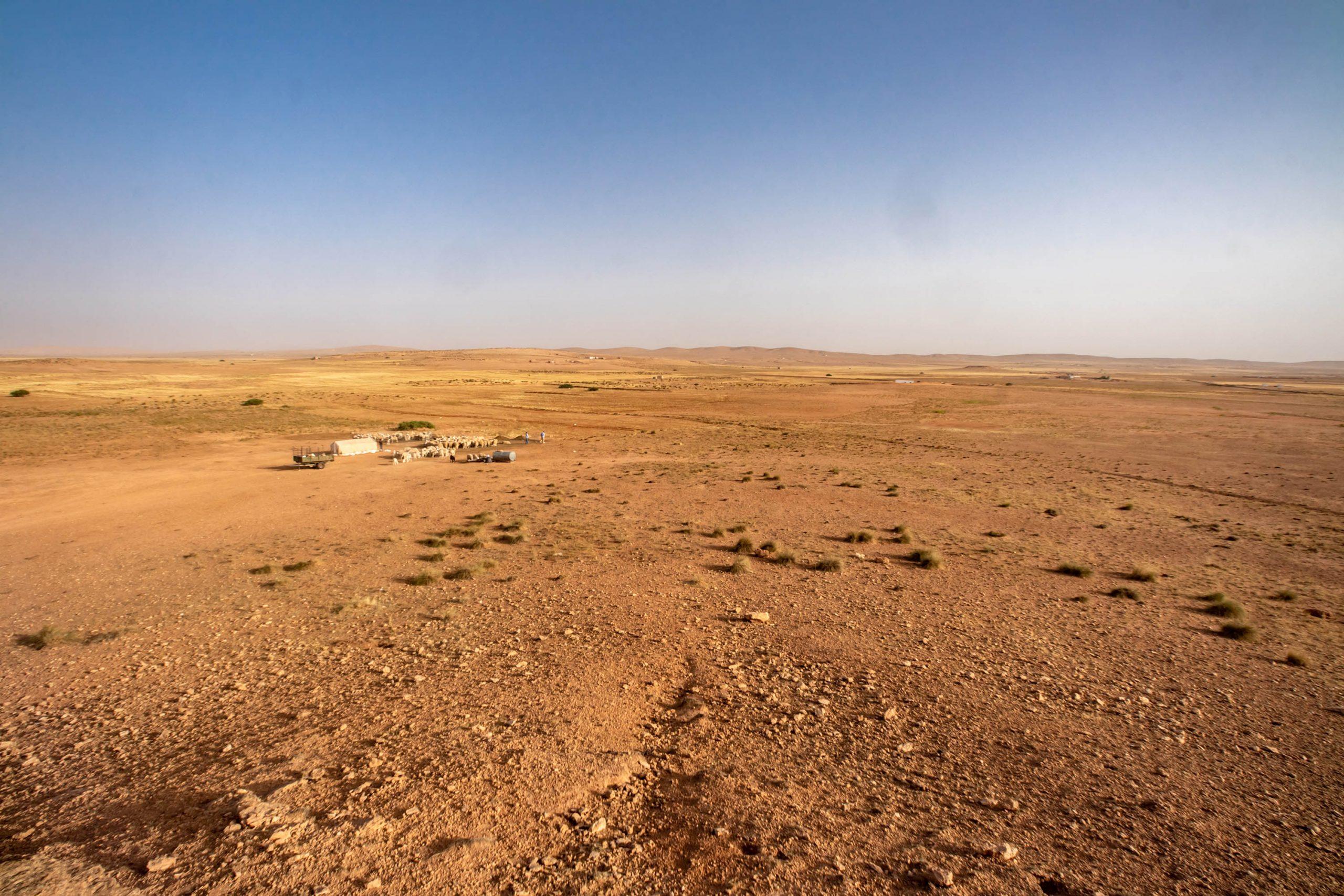 28 June 2020: The Algerian steppe between the verdant Mediterranean coast to the north and the unforgiving Sahara Desert to the south. (Photograph by Abderazak HadjTahar)