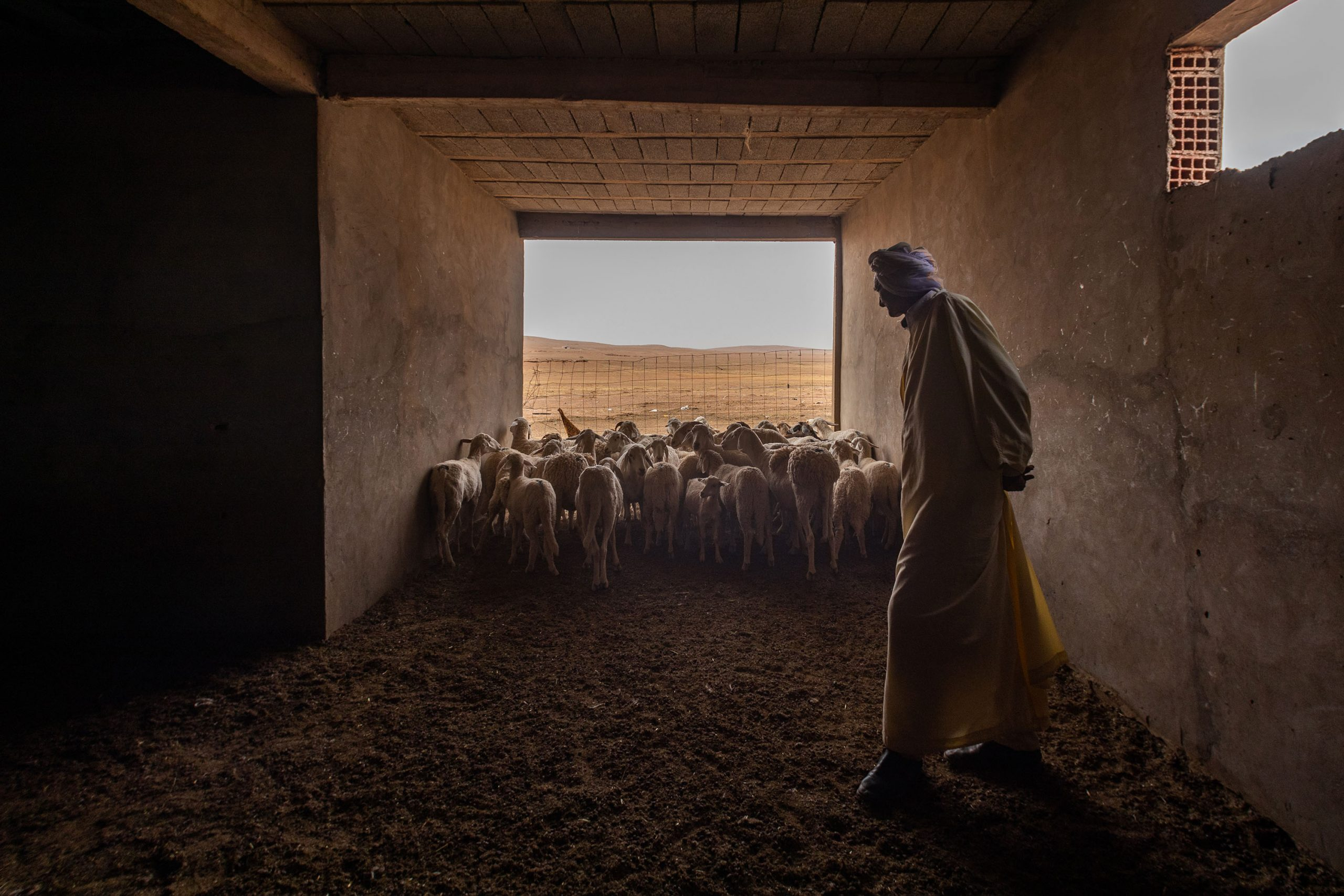 27 June 2020: Mohamed Dahmoune keeps his sheep in two pens a few kilometres from his home. (Photograph by Abderazak HadjTahar)